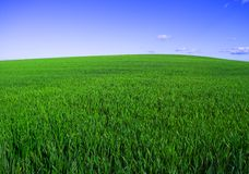 Spring. Green field in early spring Stock Photos