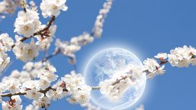 Spring. 16x9 wide-screen aspect ratio background - blossoming apricot, blue sky, season spring, planet in sky. Elements of this image furnished by NASA Stock Images
