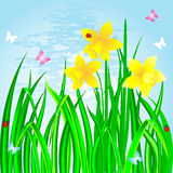 Spring. Spring landscape with the daffodils, grass and ladybirds Stock Photography