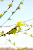 Spring Royalty Free Stock Photos