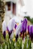 Spring ! Royalty Free Stock Photography