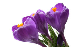 Spring! Royalty Free Stock Images