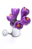 Spring! Royalty Free Stock Photos