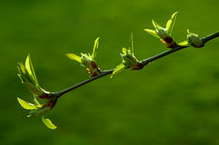 Spring. Green plant on spring time, growing Royalty Free Stock Image