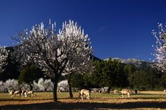 Spring. A horse farm in Majorca,Spain Royalty Free Stock Photography