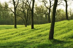 Free Spring Stock Photography - 2309172
