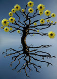Spring. Surreal composition of a tree with blooming branches royalty free stock photography