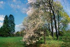Spring. stock image