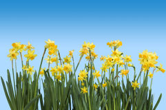 Free Spring Royalty Free Stock Image - 3979106