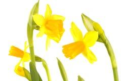 Spring Stock Image