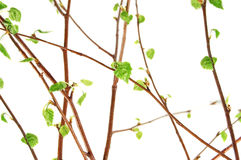 Spring. A beautiful spring branch isolated stock photo