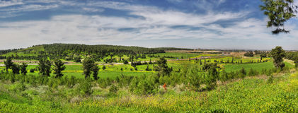 Spring. Panoramic picture of spring field and forest in Israel Stock Images