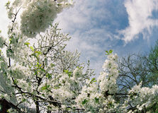 Spring. Spring on Northern Caucasus,Russia Royalty Free Stock Photo