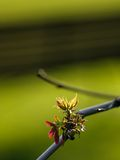 Spring. Is coming, a branch in new buds, bench in background (E-1 + carl zeiss sonnar 135mm F2.8 Royalty Free Stock Photos