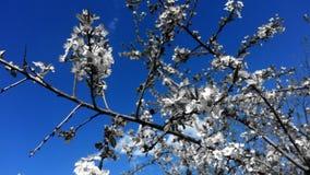 Spring1 免版税库存照片
