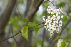 Spring. Tree blooming stock photography