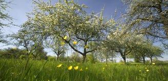 Spring. Grassland in springtime royalty free stock image