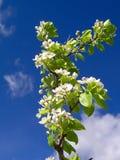Spring. Flower tree Stock Image