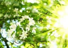 Spring. Sun beams in green leaves with spring flowers Royalty Free Stock Photos