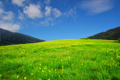 Spring. Beautiful spring Landscape with green meadow and blue sky Stock Images