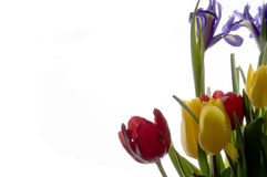 Spring. Colorful spring flowers isolated on white Royalty Free Stock Images