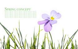 Free Spring Stock Photos - 8722663