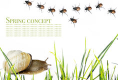 Spring. Concept. snail, beetles and flora against white background Stock Photo