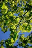 Spring. Blossom Royalty Free Stock Photo