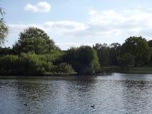 Spring湖 免版税图库摄影