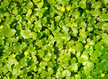 Spring. Green spring meadow. Natural background royalty free stock images