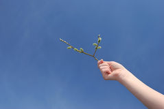 Spring. Plant in  women's hands Stock Image