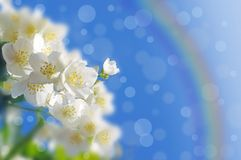 Spring abstract background. Royalty Free Stock Image