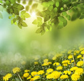 Spring abstract  background Royalty Free Stock Image