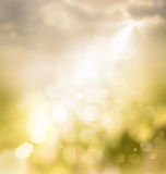 Spring abstract bokeh Royalty Free Stock Photo