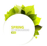 Spring abstract floral background Royalty Free Stock Photo