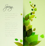 Spring abstract floral background Stock Photography