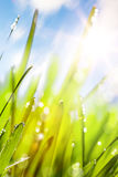 Spring abstract nature background Stock Photo