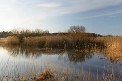 Spring afternoon. On Harku lake, Tallinn, Estonia Stock Image