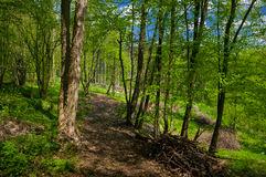 Spring afternoon. Royalty Free Stock Images