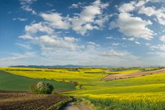 Big fields on hill. Spring agricultural landscape with big fields on hill, farmland stock photo
