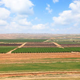Spring agriculture valley Stock Photography