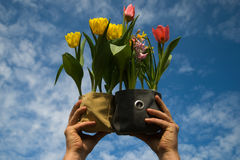 Spring in the air Stock Photo