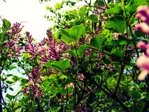Spring Is In The Air. Blossoming tree in the spring Royalty Free Stock Images