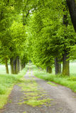 Spring Alley Royalty Free Stock Photography
