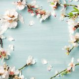 Spring almond blossom flowers over light blue background, square crop Stock Photos