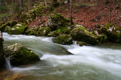Spring Alpin river,Switzerland Royalty Free Stock Images