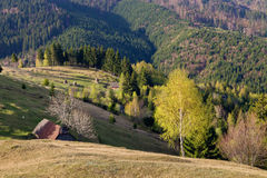 Spring alpine landscape with green fields in Transylvania, Romania Royalty Free Stock Photo