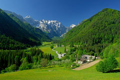 Spring in alpine valley. Alpine Logarska valley in Slovenia in the end of May Royalty Free Stock Photos