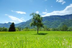 Spring alps Stock Photography