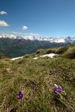Spring in the Alps Royalty Free Stock Photography